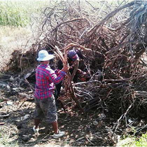 ich beschließe mit Hilfe von zwei Arbeitern den umgestürzten Baum nach Hause zu schleppen.
