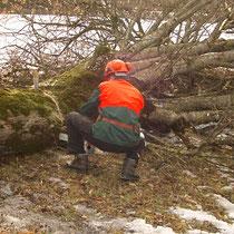 Baumzuschnitt zum Abtransport