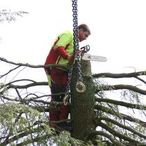 Kette anbringen zur Baumabtragung