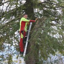 Vorbereitung zur Baumkronenabtragung