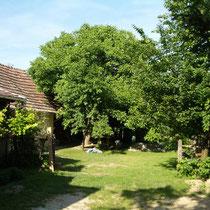 Garten mit großen Nußbaum