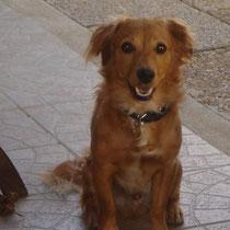 SAMY - 1 an : Adopté le 5 Décembre 2009