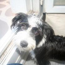 BERNY - 1 an : Adopté le 27 Octobre 2012