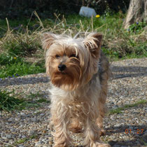 GINA - 8 ans : Adoptée le 26 Avril 2014