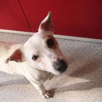 GRIBOUILLE - 2 ans : Adopté le 6 Mars 2013