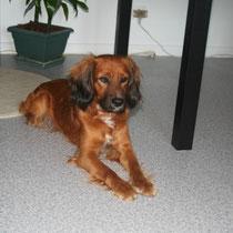 TILIN - 2 ans : Adopté le 14 Mai 2011