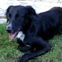 DALLIA - 1 an : Adoptée le 5 Février 2009