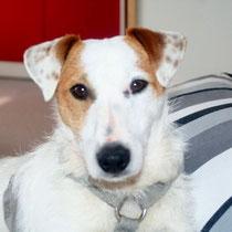 BILLY - 2 ans : Adopté le 16 Mars 2014