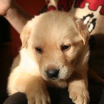 GET - 2 mois : Adopté le 23 Janvier 2010