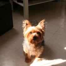 FRIPOUILLE - 10 ans : Adopté le 15 Octobre 2010