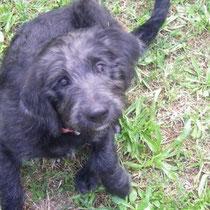 DIEGO - 3 mois : Adopté le 6 Jui 2008