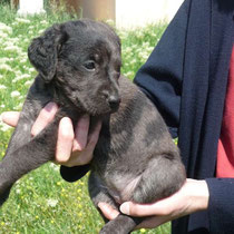 DIAMANT - 3 mois : Adoptée le 11 Mai 2011