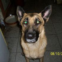TAIRA - 3 ans : Adoptée le 29 Novembre 2008