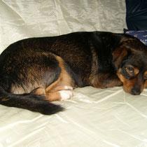 CALCETINE - 2 ans : Adopté le 4 Décembre 2008