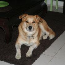 WHISKY - 5 ans : Adopté le 23 Juillet 2011