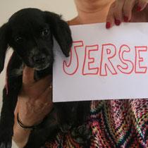JERSEY - 4 mois : Adoptée le 19 Octobre 2014