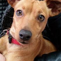 DOUDOU - 2 ans : Adopté le 20 Novembre 2015