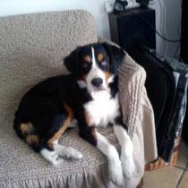 MAYA - 10 mois : Adoptée le 3 Janvier 2012