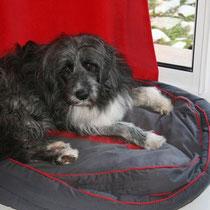 POLLUX - 2 ans : Adopté le 13 Janvier 2009
