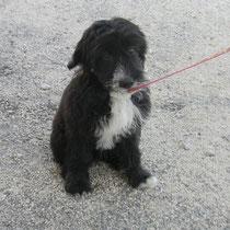 PICASSO - 4 mois : Adopté le 23 Juin 2011