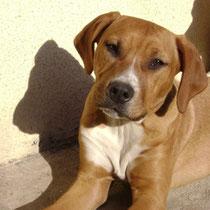 HARLEY - 3 ans : Adopté le 2 Mai 2013