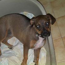 SHADIE - 10 mois : Adoptée le 3 Octobre 2010