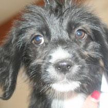 JOY - 3 mois : Adoptée le 22 Septembre 2014