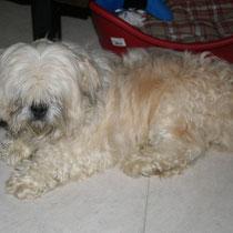 BLUE - 4 ans : Adopté le 26 Décembre 2010
