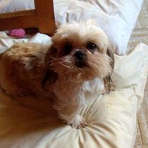 BELLE - 3 ans : Adoptée le 25 Février 2012