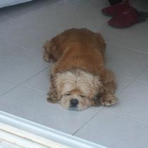 TYSIS - 7 ans : Adoptée le 3 Avril 2009