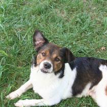 YACO - 6 ans : Adopté le 31 Octobre 2008