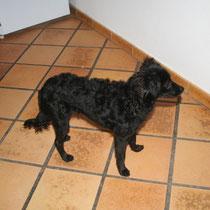 DOUSKA - 8 mois : Adoptée le 10 Novembre 2008