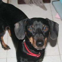 TITOP - 6 ans : Adopté le 3 Avril 2010
