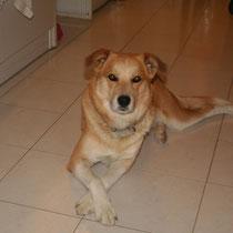 WHISKY - 6 ans : Adopté le 15 Avril 2012
