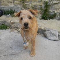 MISS - 6 ans : Adoptée le 4 Septembre 2011