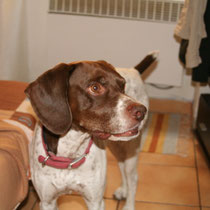 ALFONSO - 6 ans : Adopté le 17 Novembre 2009