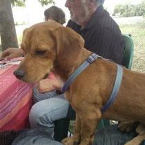 HENDRIX - 18 mois : Adopté le 7 Novembre 2013