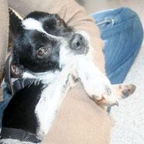 ZOE - 5 ans : Adoptée le 21 Juin 2014