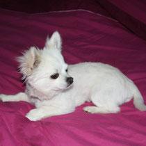 ANIS - 3 ans : Adopté le 18 Juin 2009