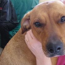 TINA - 3 ans : Adoptée le 20 Mars 2011