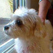 PEPETTE - 4 ans : Adoptée le 25 Octobre 2013