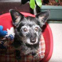 DAFFY - 9 ans : Adopté le 6 Décembre 2010