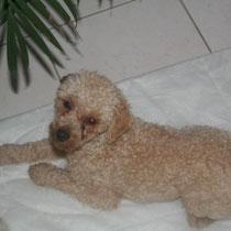 DADOU - 1 an : Adopté le 4 Mars 2009