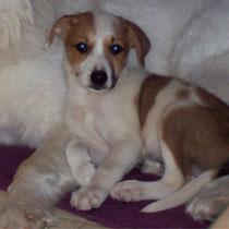FIZZ - 4 mois : Adopté le 30 Octobre 2009