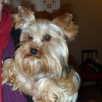 EMILY -3 ans : Adoptée le 31 Décembre 2012