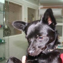 SAPHIR - 2 ans : Adopté le 12 Octobre 2010