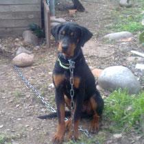 PACHA - 6 mois : Adopté le 27 Mars 2010