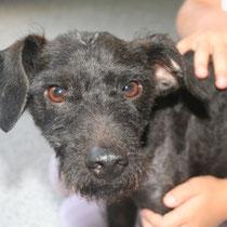 FLYNN - 10 mois : Adopté le 17 Septembre 2011