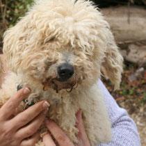 BANDIT - 4 ans : Adopté le 10 Octobre 2008