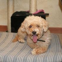 BELLA - 10 ans : Adoptée le 11 Octobre 2009